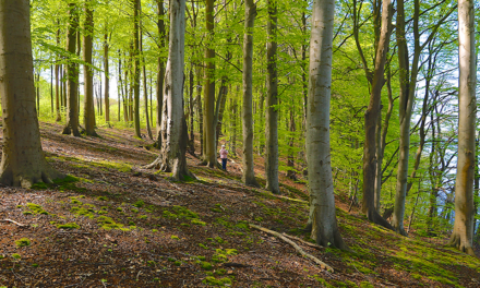 Skovvandring med Thurø Skove